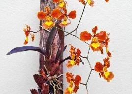 Suporte para orquídea