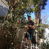 empoeirados luciano cortando a árvore com a sabre da starrett